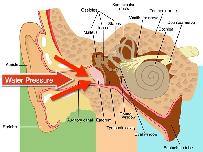 How outside pressure affects the diver's ear